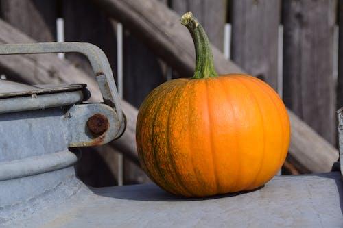 Foto stok gratis agrikultura, dinding kayu, halloween, jatuh