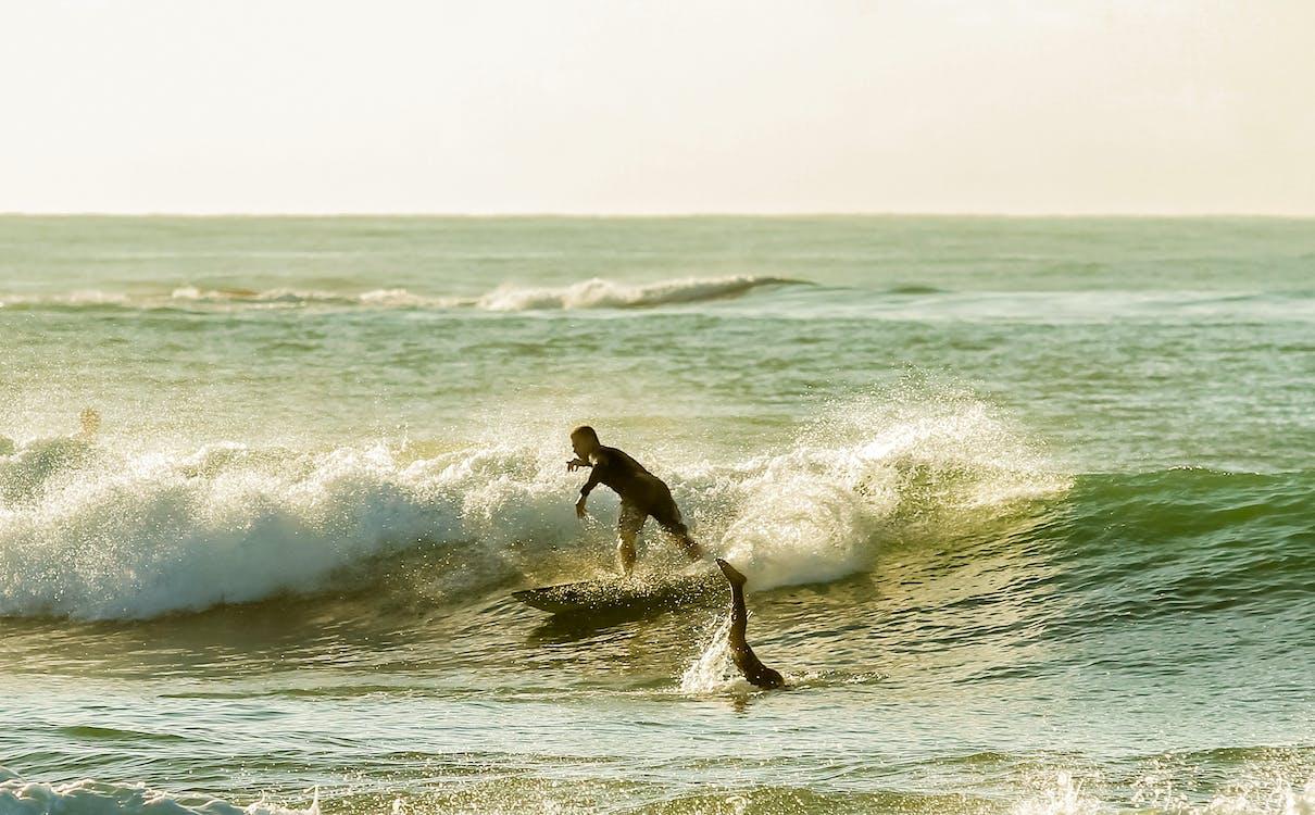 anjing surfer, berselancar, depan pantai