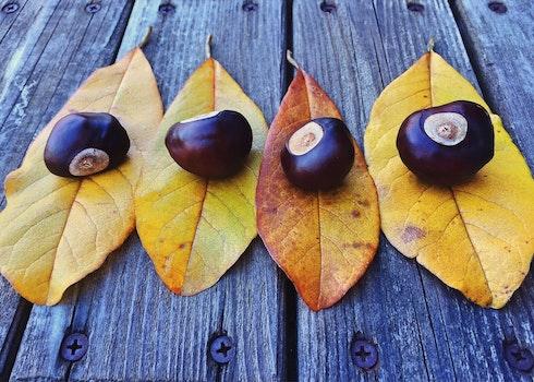 Free stock photo of leaf, leaves, autumn, fall