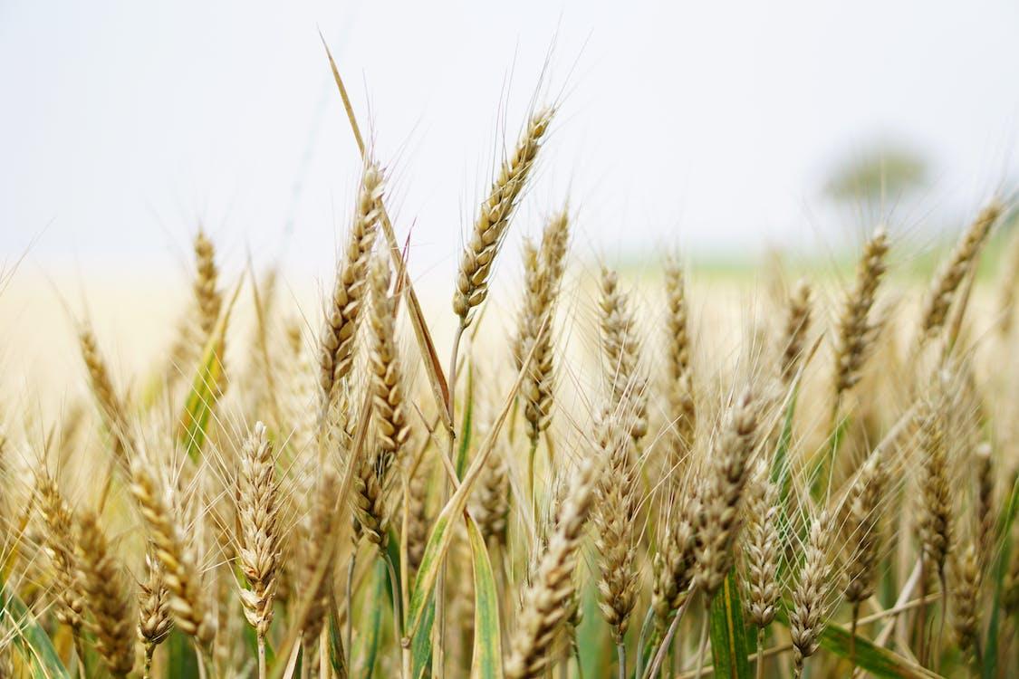 akkerland, bebouwbaar, boerderij