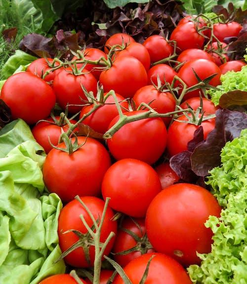 Fotobanka sbezplatnými fotkami na tému hlávkový šalát, jedlo, ovocie, paradajky