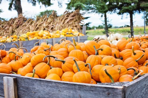 Orange Squash Lot on Gray Wooden Container