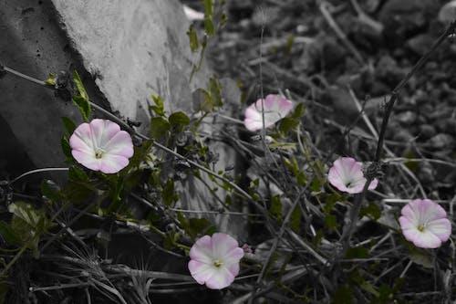 Free stock photo of flowering shrub, outcrop, street art