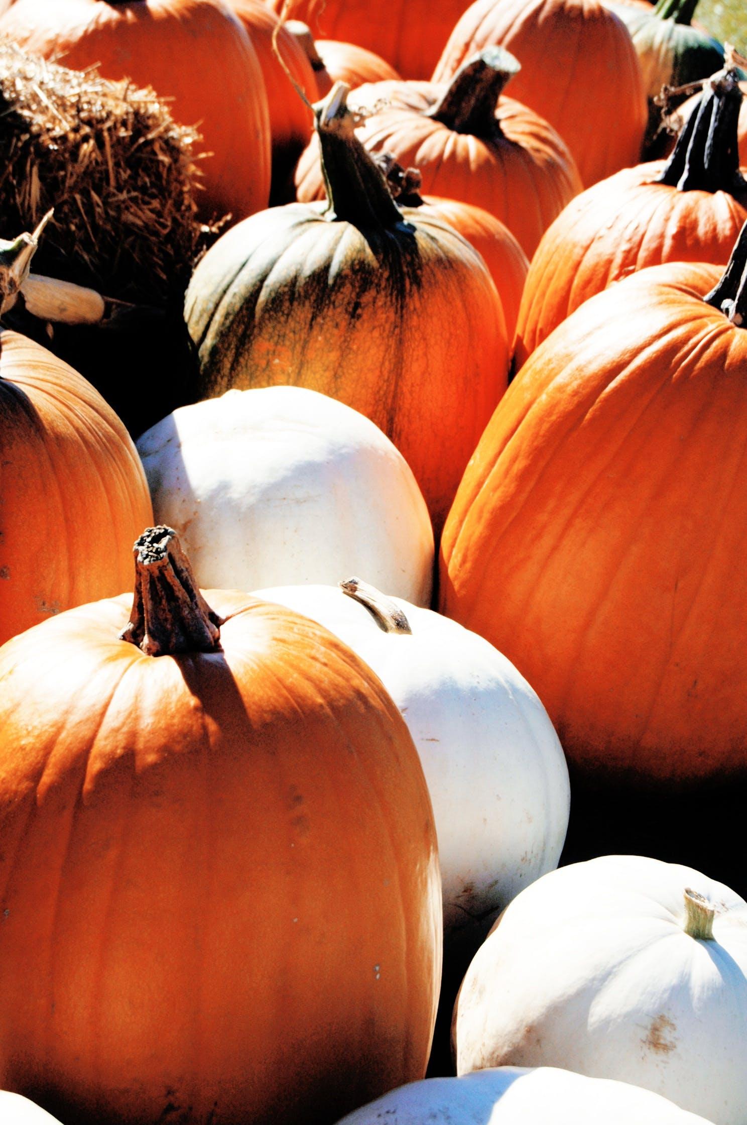 Free stock photo of food, harvest, fall, orange