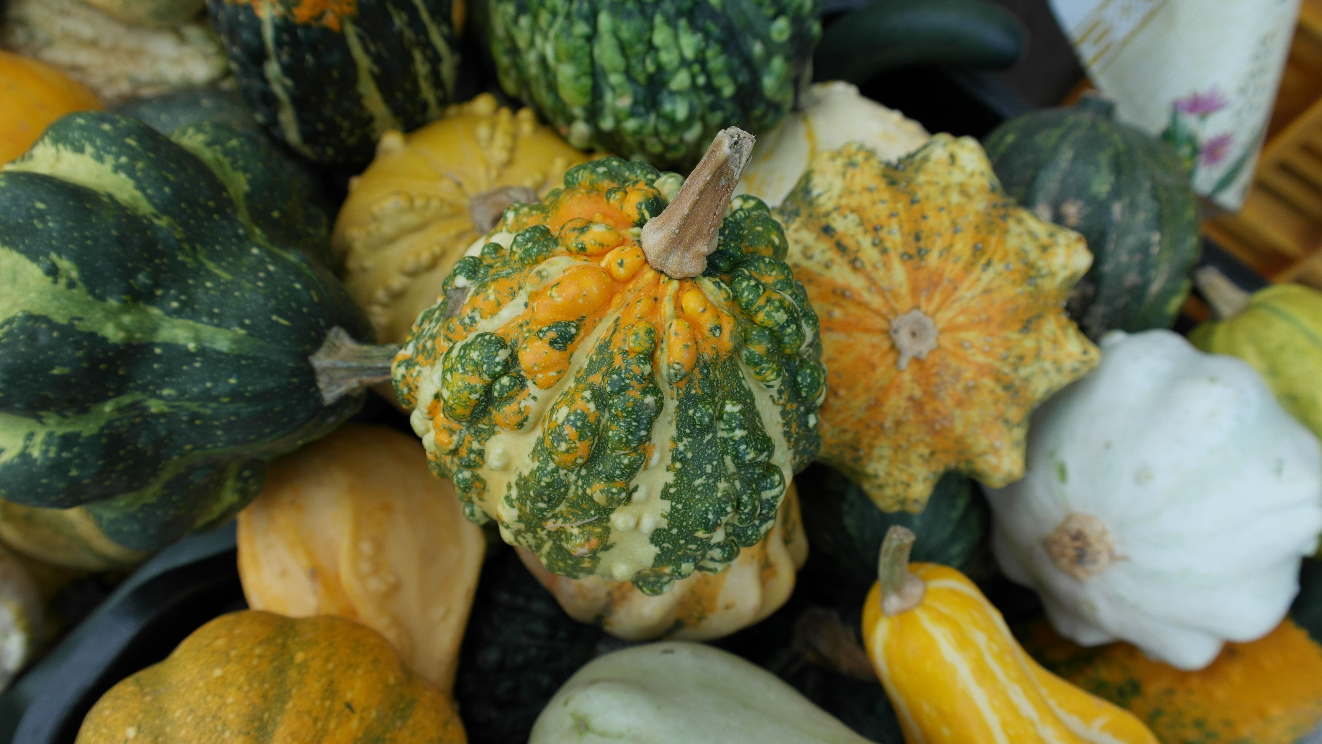 Free stock photo of vegetables, yellow, autumn, colorful