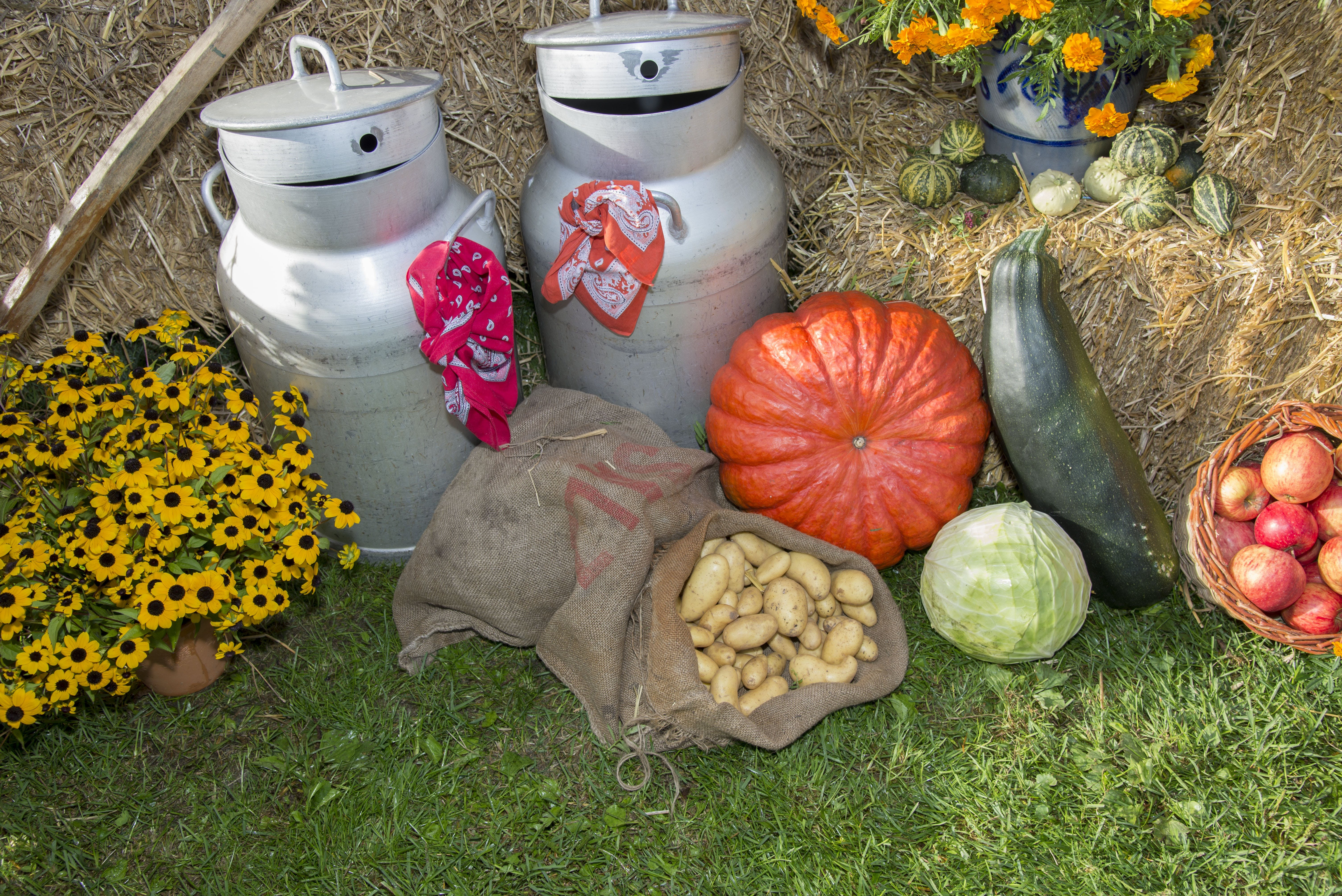 Free stock photo of vegetables, festival, agriculture, fruits