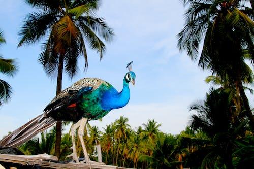 Ingyenes stockfotó élénk színű, királyi, kókuszfák, madár témában