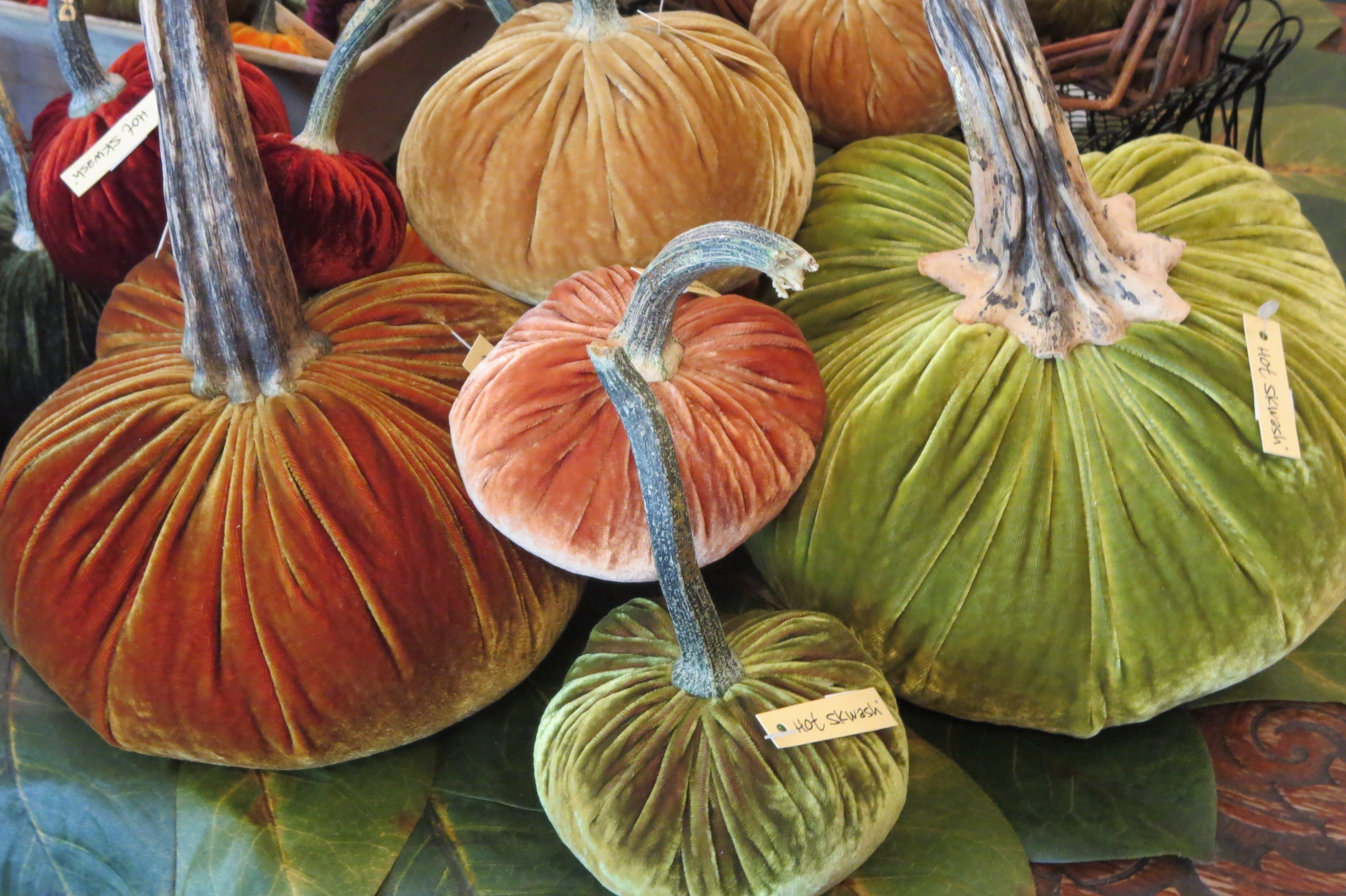 Free stock photo of festive, harvest, display, autumn