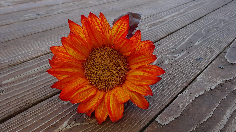Orange Flower on Brown Wooden Board
