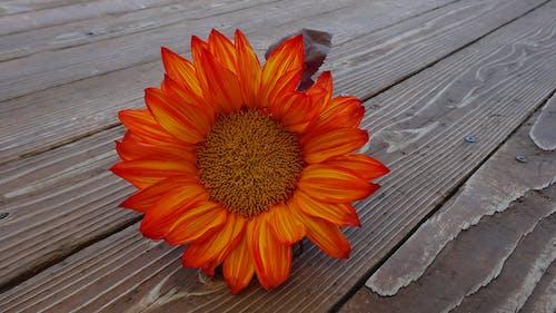 Fotobanka sbezplatnými fotkami na tému čerstvý, drevený, flóra, kvet