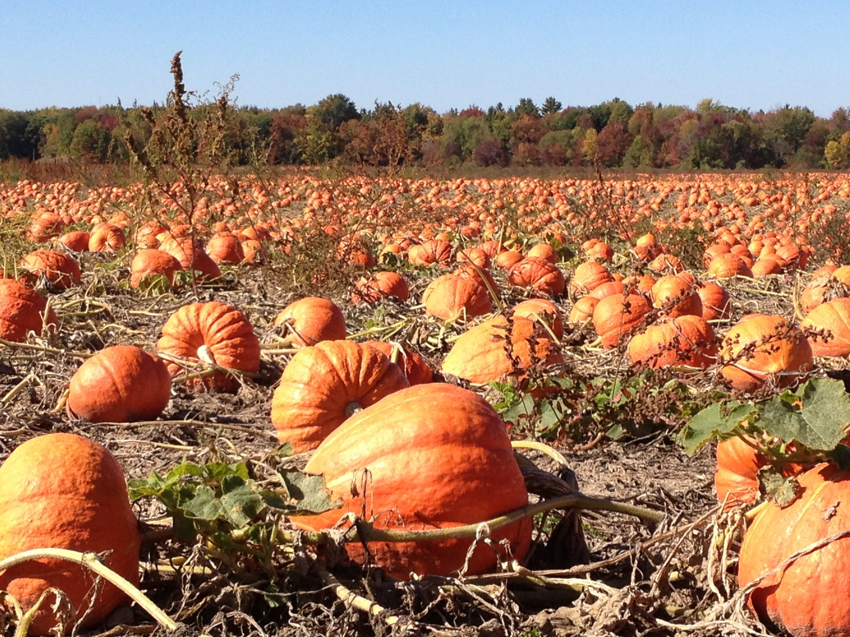Free stock photo of agriculture, autumn, crop, fall