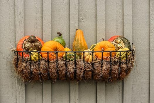 Free stock photo of food, holiday, festive, garden