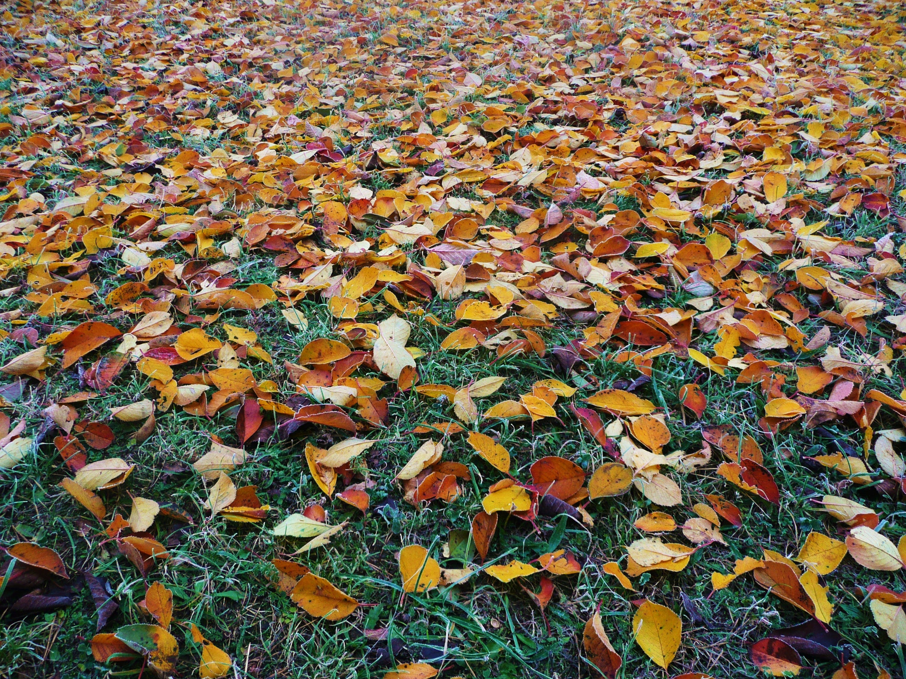 Brown Dried Leaves on Green Field