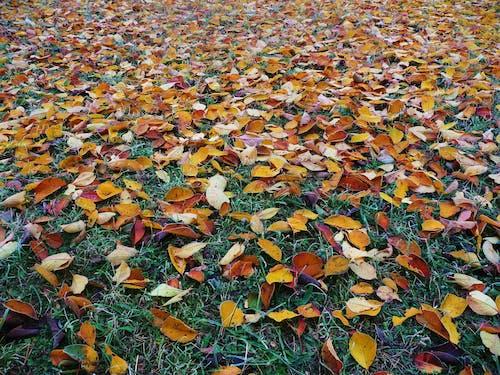 10月, オーク, オレンジ, カラフルの無料の写真素材