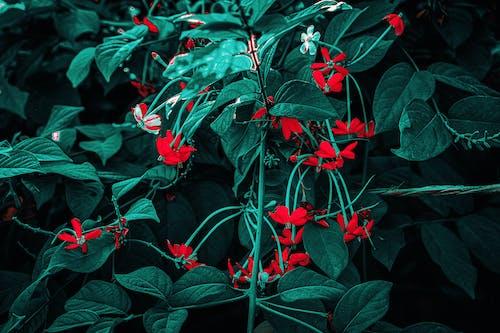 Gratis stockfoto met 4k achtergrond, artistieke achtergrond, blauw, bloeien