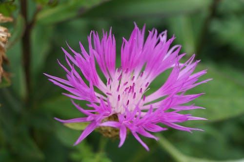 Foto profissional grátis de broto, floração