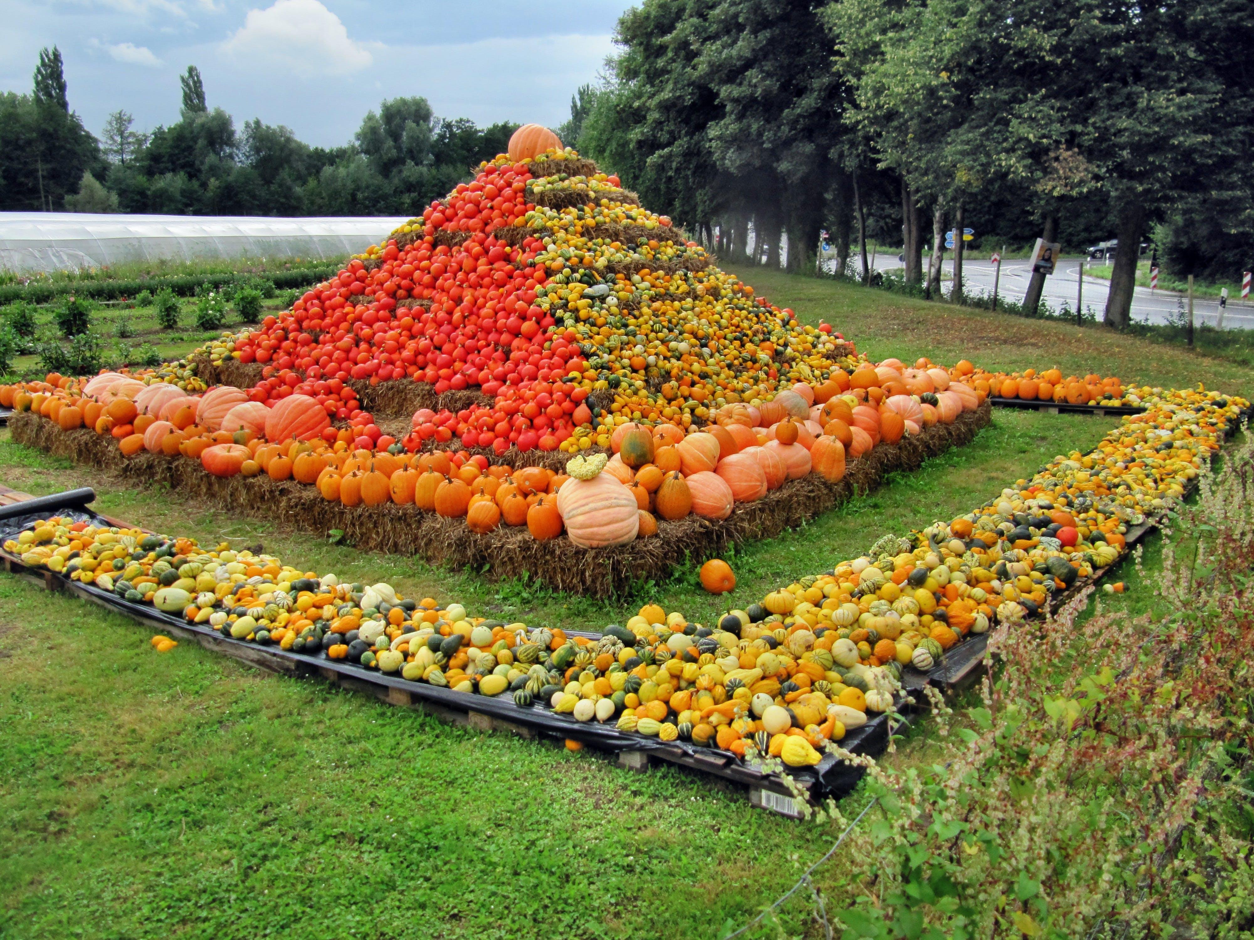 Free stock photo of healthy, vegetables, autumn, pumpkin