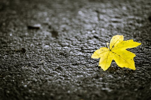 Základová fotografie zdarma na téma asfalt, list, podzimní listí, samota