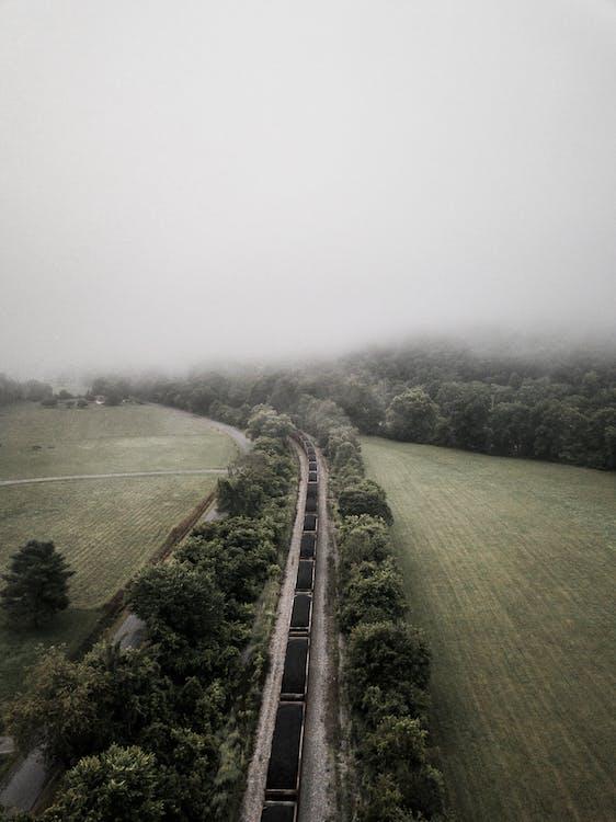 Безкоштовне стокове фото на тему «Денне світло, дерева, дорога»
