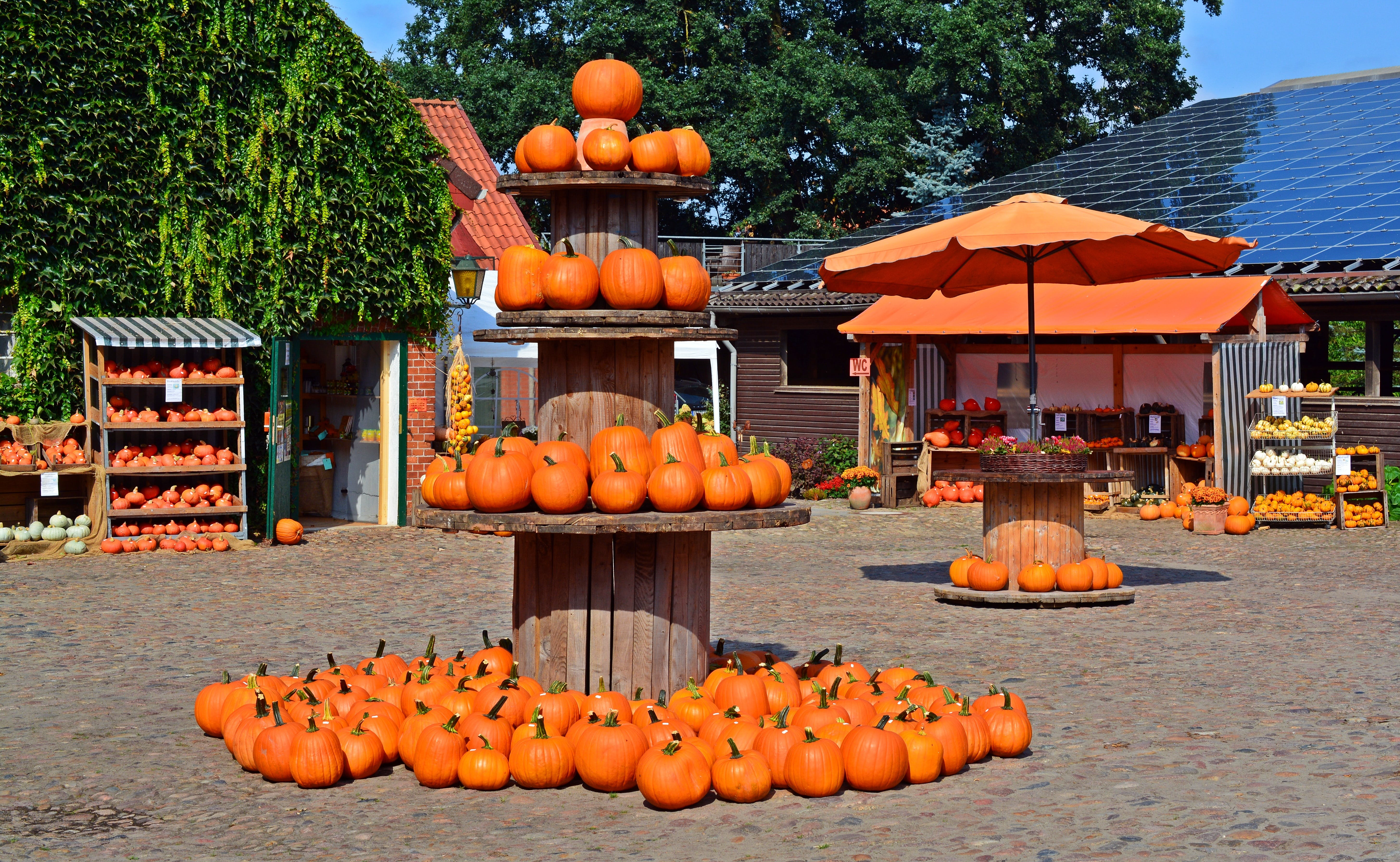 Orange Pumpkins on Brown Wooden Rack