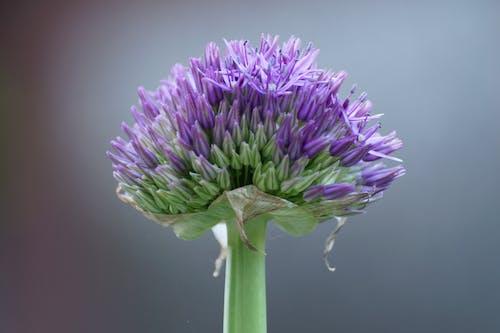 Foto profissional grátis de floração