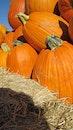 harvest, orange, halloween