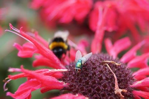 Foto profissional grátis de floração, mosca