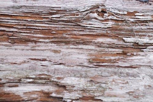 Foto profissional grátis de estrutura, madeira