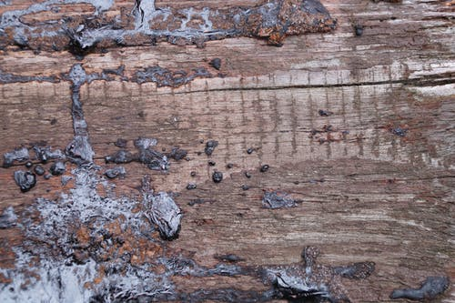 Foto profissional grátis de alcatrão, estrutura, madeira