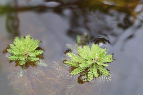 Foto profissional grátis de planta aquática