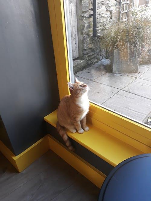 Immagine gratuita di #mobilechallenge, gatto, giallo