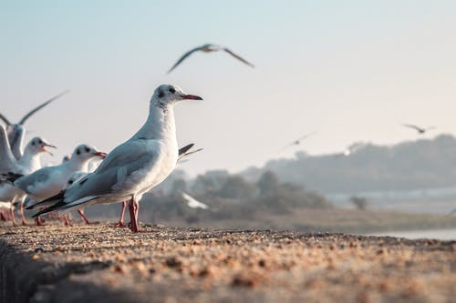 Selective Focus Photo of Seabirds