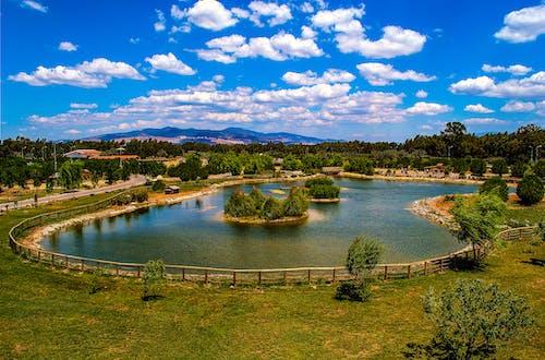 bulutlar, hayvanat bahçesi, hindi, rüzgarlı içeren Ücretsiz stok fotoğraf
