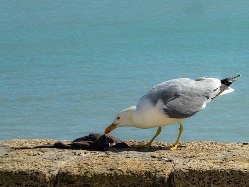 Fotos de stock gratuitas de agua del océano, almuerzo, animal, animal marino