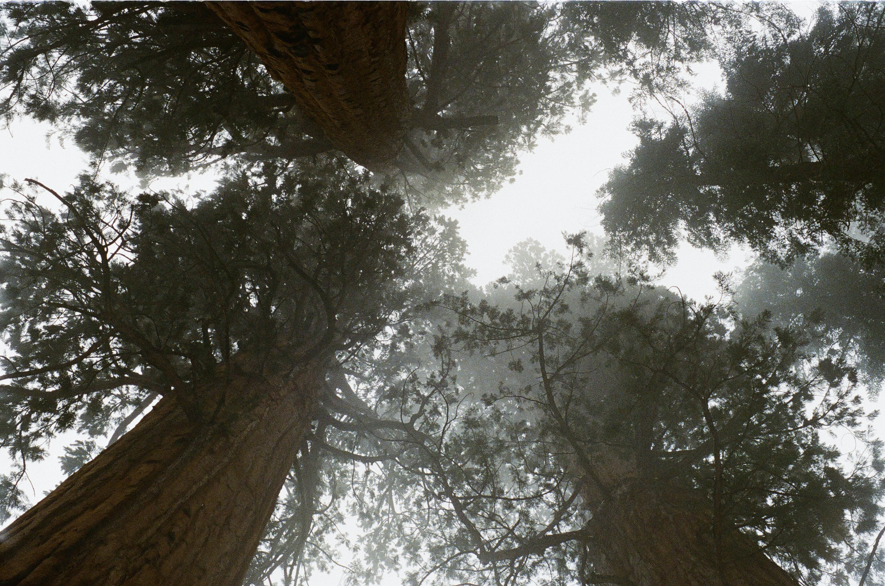 forest, high, large