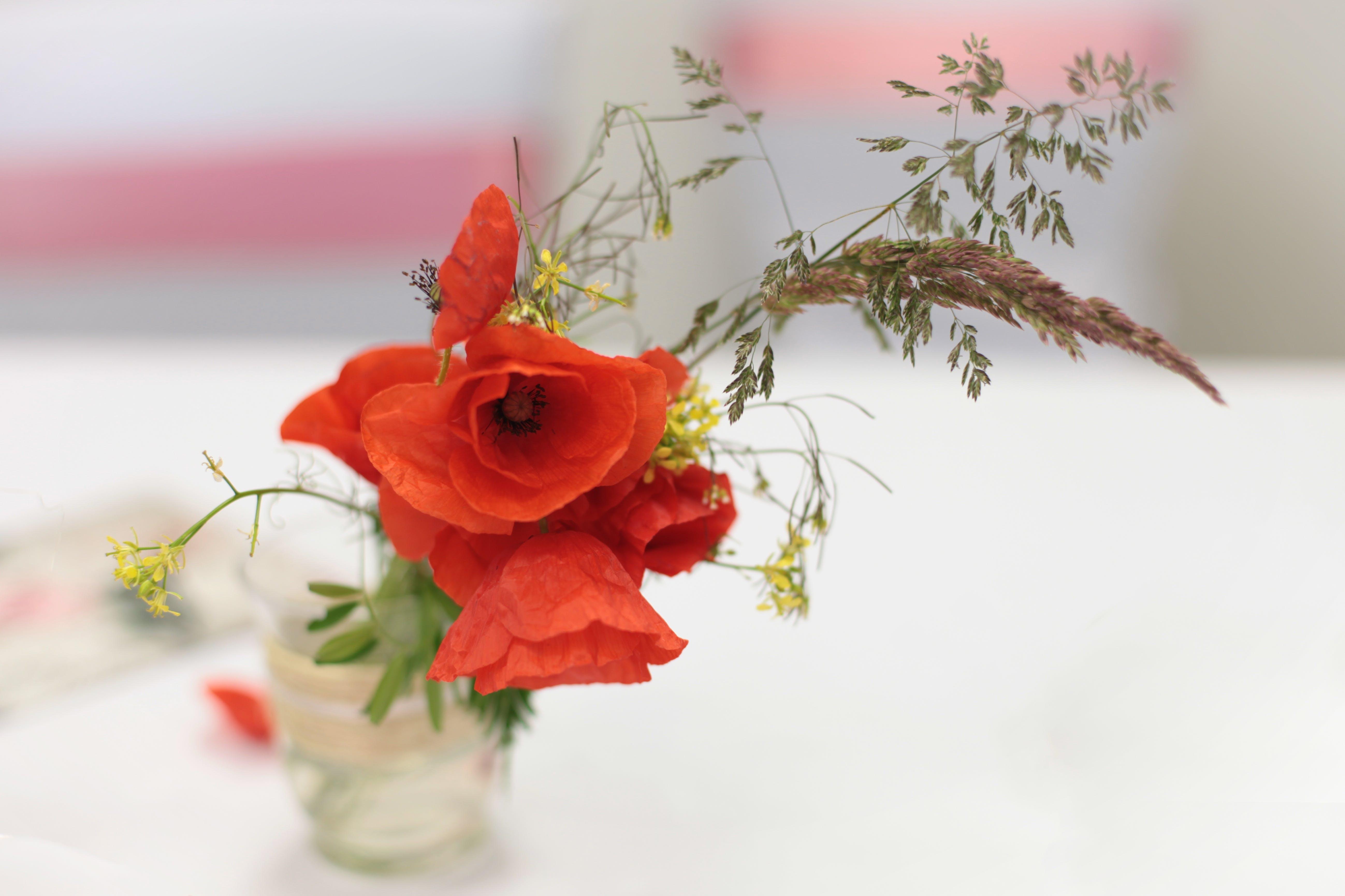 Free stock photo of flower, decoration, poppy, wedding