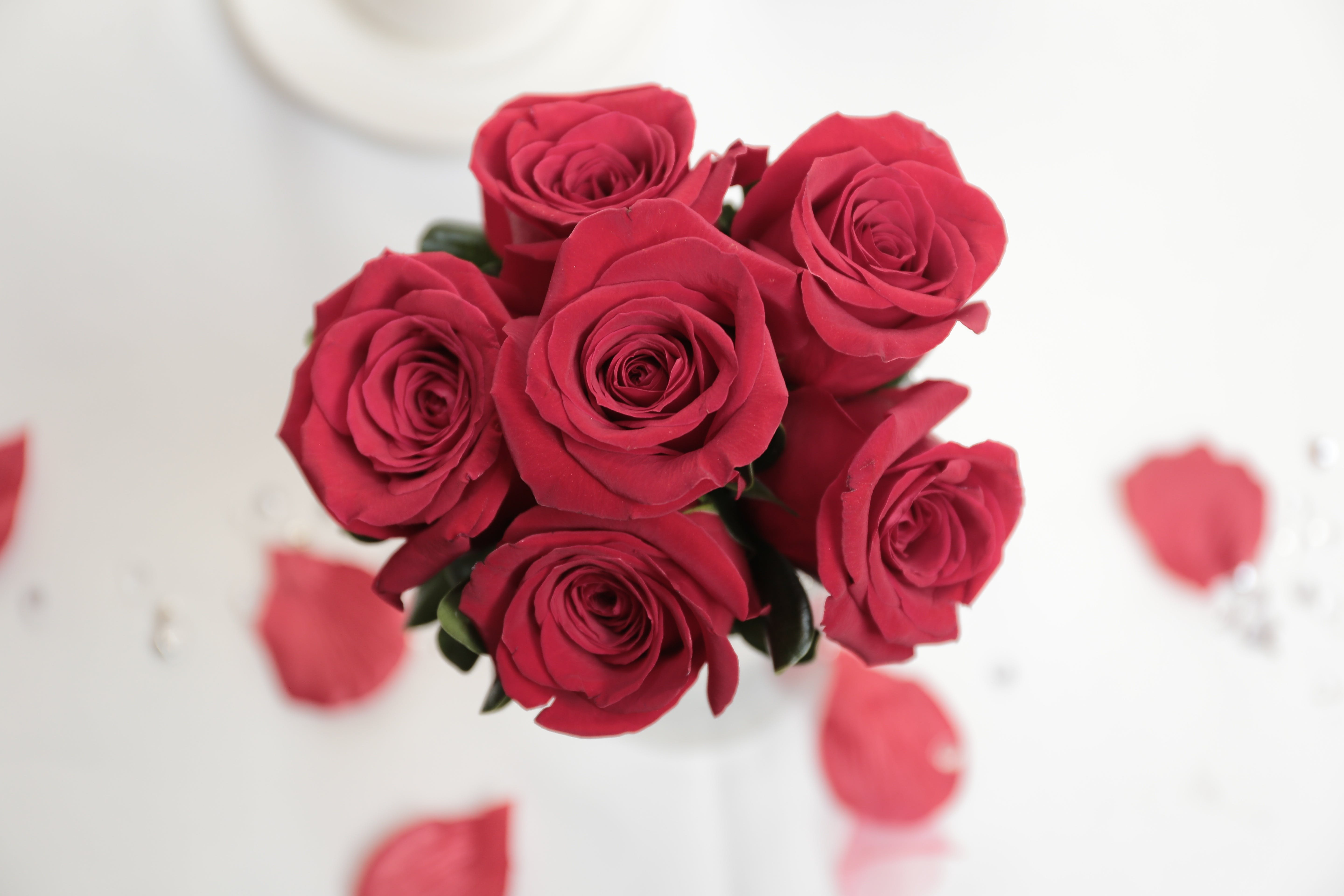 Free stock photo of flowers, red, roses, wedding