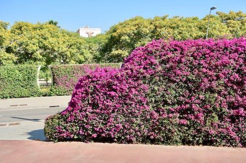 Ilmainen kuvapankkikuva tunnisteilla kukka-suoja