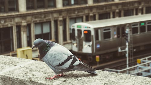Free stock photo of bird, buildings, cement, chicago