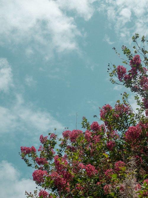 Foto stok gratis alam, botani, hijau, Jeruk