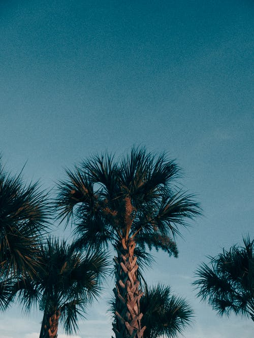 Foto stok gratis bagus, florida, matahari terbit, orlando