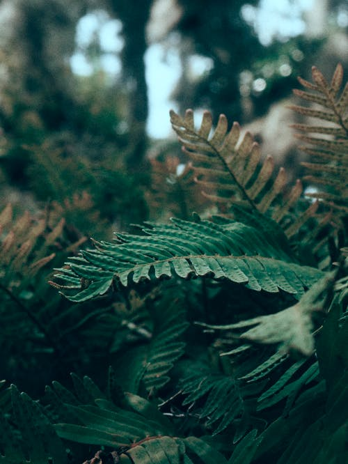Free stock photo of aesthetics, florida, forest, gree