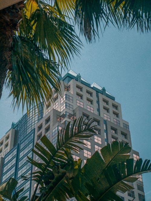 Foto stok gratis bangunan, biji-bijian, langit, orlando