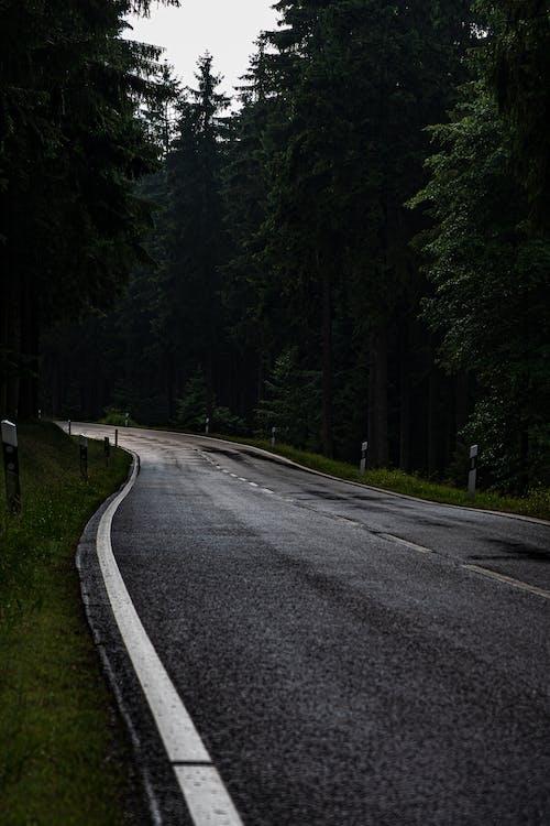 Darmowe zdjęcie z galerii z feldberg, fotografia krajobrazowa, lato, natura