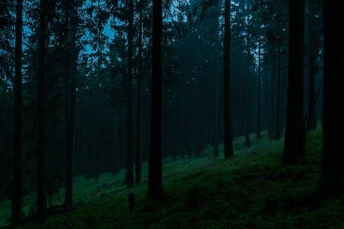 Darmowe zdjęcie z galerii z drewno, feldberg, fotografia krajobrazowa, góra