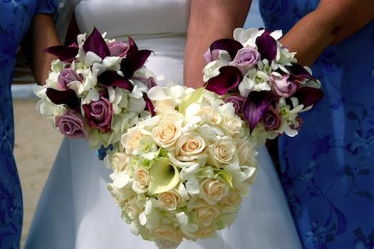 Free stock photo of flowers, wedding, ladies, arrangements