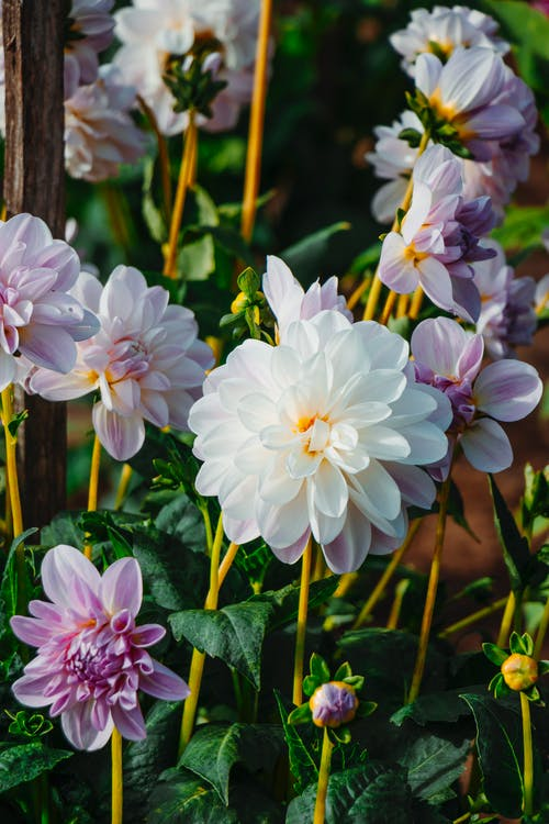 Photos gratuites de beauté, fleurs, joli, san francisco