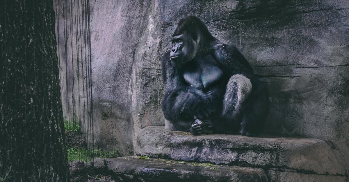 Canon 80d Used >> Black Gorilla · Free Stock Photo