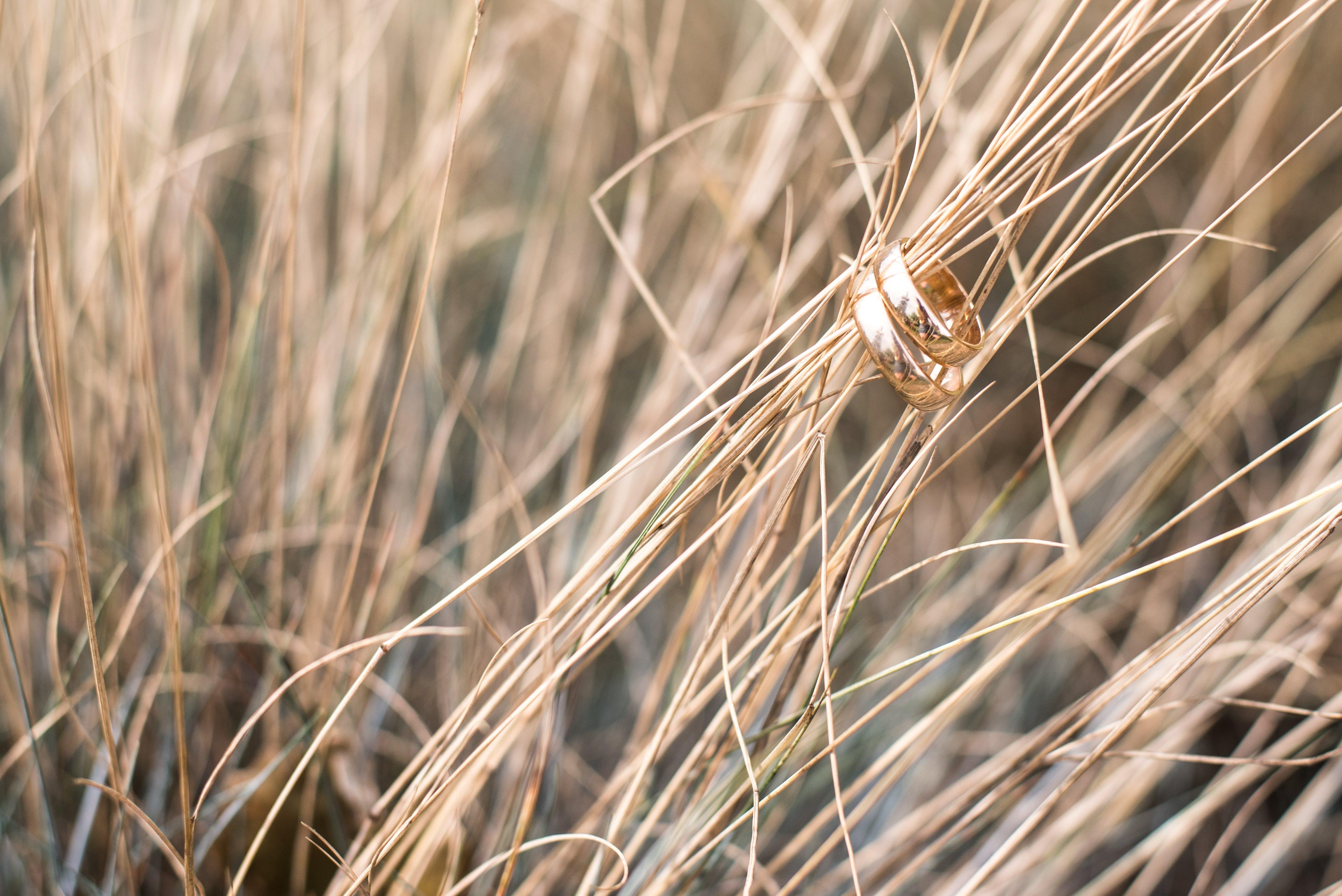 agriculture, beautiful, blur