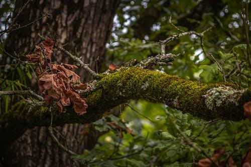 Ảnh lưu trữ miễn phí về cành cây, cây héo, chi nhánh, lá